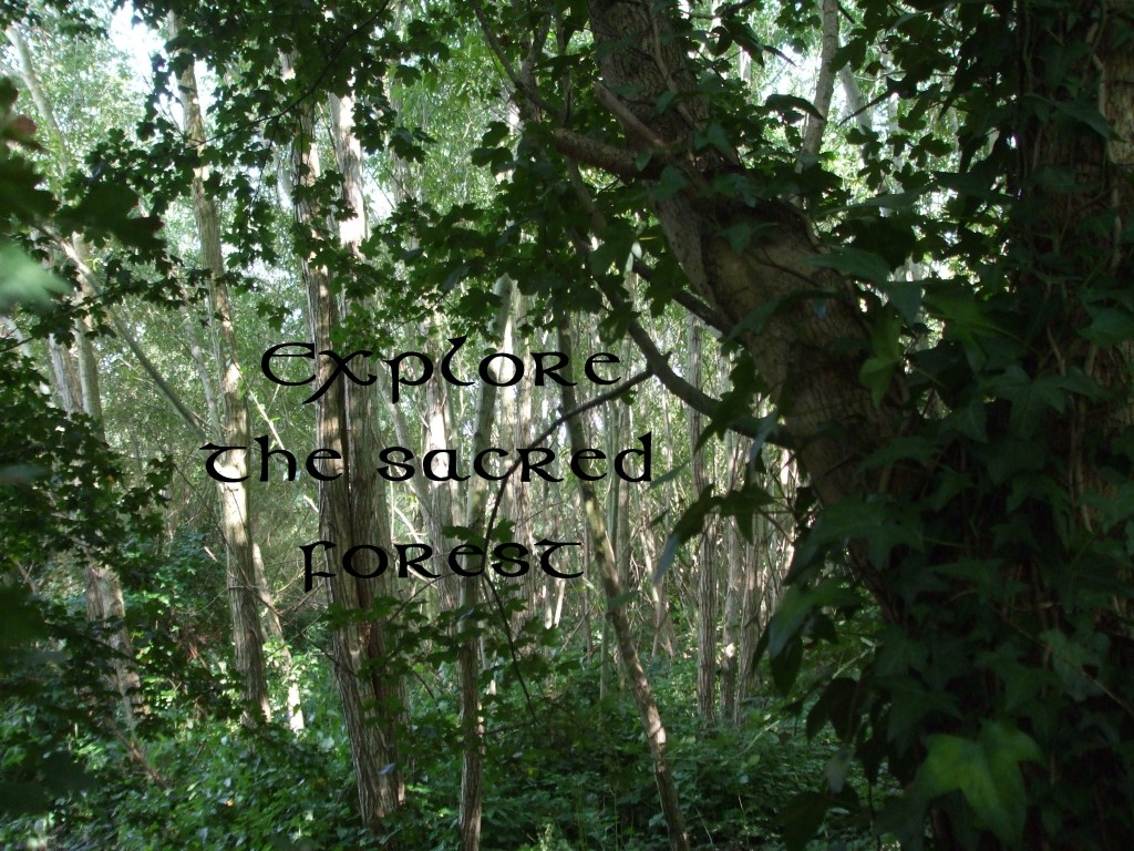 Explore the Sacred Forest